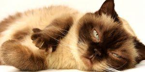 Los hermosos gatitos podrían causarnos enfermedades graves según los científicos