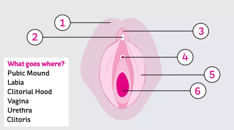 partes_vagina1