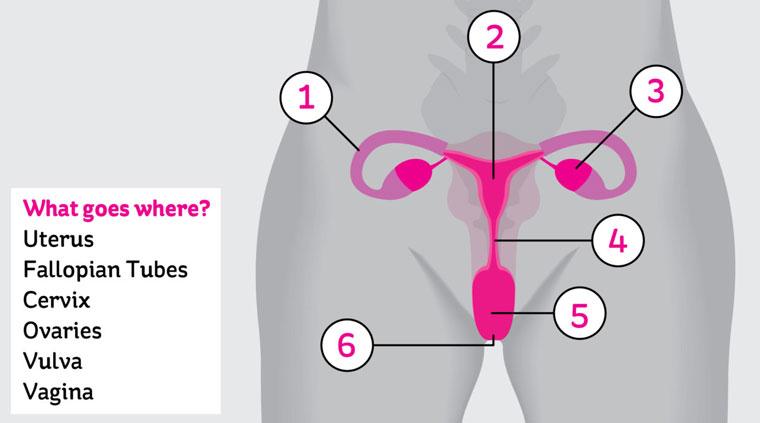 partes_vagina2