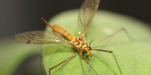 Los insectos modificados son grandiosos, pero nos siguen asustando los alimentos con el mismo trato