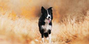 Tener una mascota es bueno para la salud, así lo indica este estudio