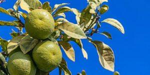 4 Beneficios que podemos obtener al consumir naranjas