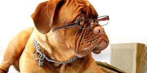 7 maneras de aliviar la ansiedad de su perro
