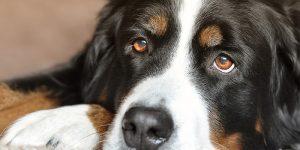 Confirmado: Tu perro entiende lo que le estás diciendo