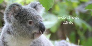 Koala es considerado por una ONG como Funcionalmente Extinto
