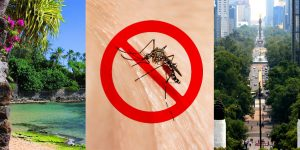 Algunos lugares para pasar las vacaciones benefician a los viajeros para evitar el Zika
