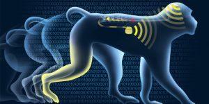 Nuevo implante cerebral permite a mono paralítico volver a caminar