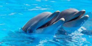 En Brasil mueren 200 delfines por un letal virus