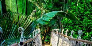 """Científicos advierten que la selva amazónica enfrenta """"espiral de la muerte"""""""