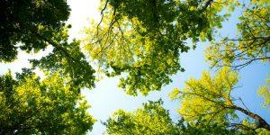 Mujer india de 105 años plantó 300 árboles porque no pudo tener hijos