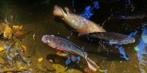 Los peces del mundo están desapareciendo mucho más rápido de lo que se pensaba