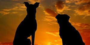 Perros dobles: se confirma dos cachorros que son gemelos idénticos