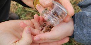 Cultiva árboles con semillas: cuales funcionan para su jardín