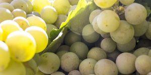 Beneficios de las uvas, desde la digestión hasta la salud de la piel