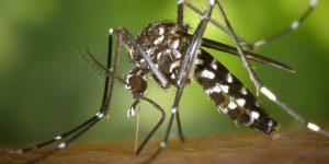 ¿Por qué el virus Zika es algo bueno para los fabricantes de condones?