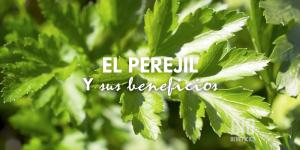 El poder del Perejil, todas sus propiedades medicinales