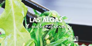 Las algas y sus propiedades curativas para tu organismo