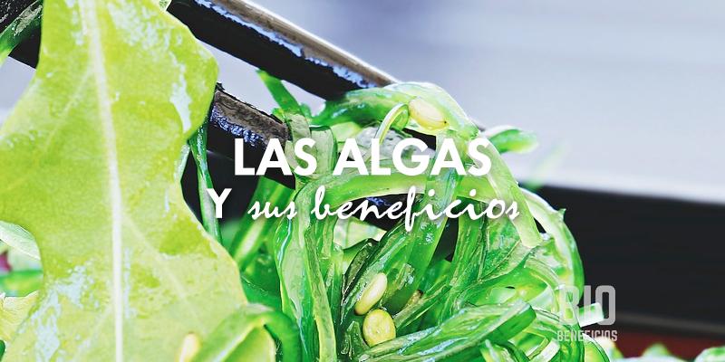 las algas y sus propiedades para la salud