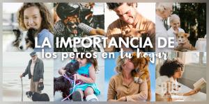 La importancia de un perro en tu hogar, en el día mundial de los perros