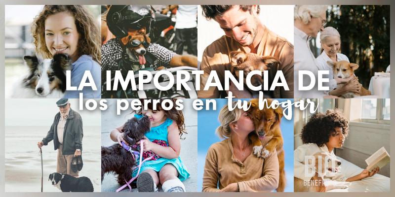 importancia de un perro en tu hogar